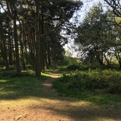 Nature walking in Longbridge